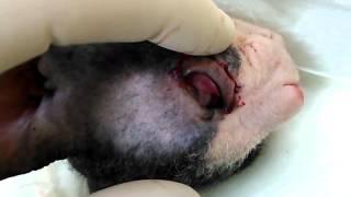 Сфинкс — после операции | Ветеринарная клиника