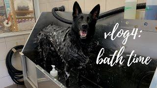 [VLOG] How to bathe my 92lbs/42kg allblack German Shepherd without breaking my back  vlog 4 in 4K