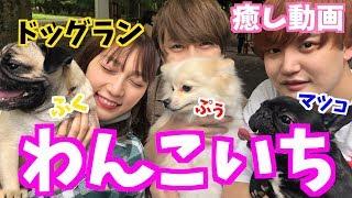それぞれの愛犬と初めてのドッグラン来た!!!