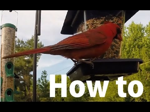 How to Attract Colorful Birds to Your Yard - YouTube