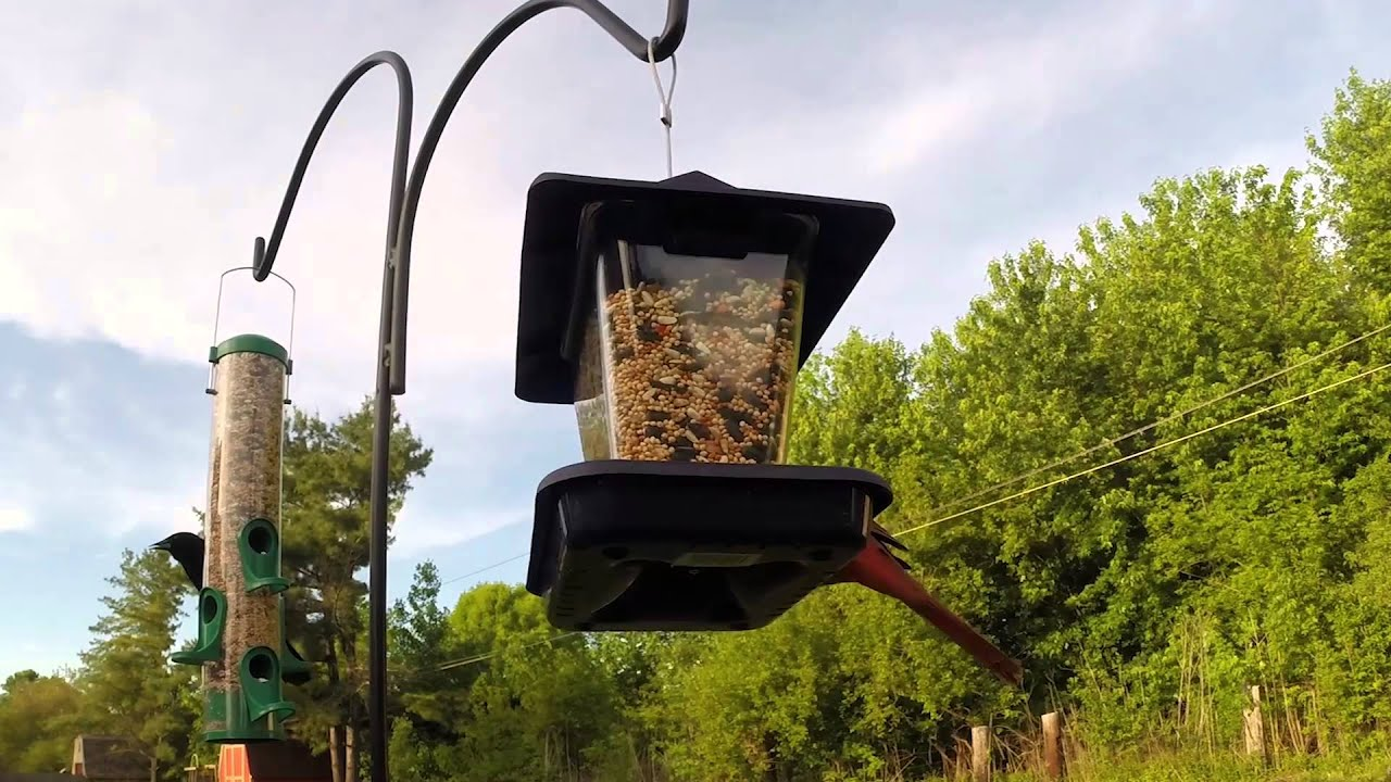 how to attract colorful birds to your yard youtube
