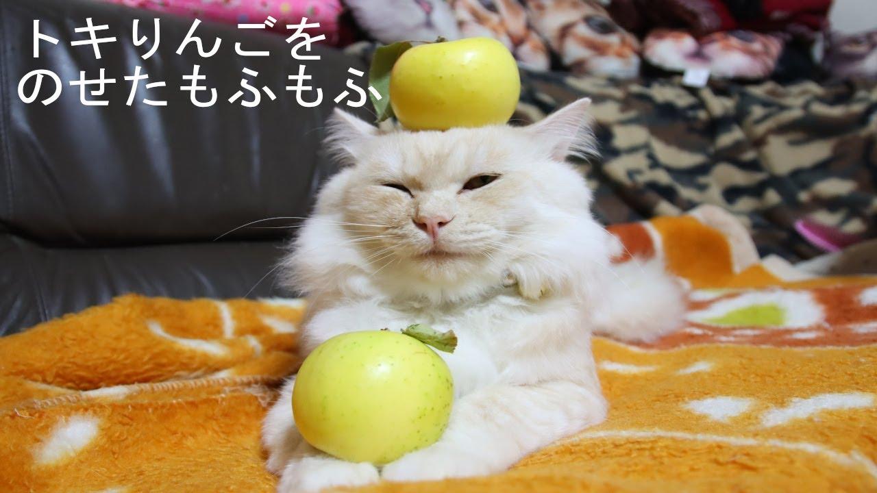 ときりんごのせ猫もふもふ 201124