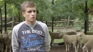 Farma virtemberg rase ovaca u Ravnom Selu - U nasem ataru 756