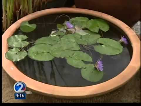 Be Green 2 Water Lilies Are Easy To Grow Youtube