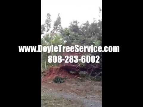Tree Removal Maui