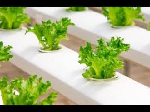 Successful Organic Farmer gauribidanur