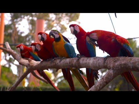 Les animaux du bout du monde sont au Parc Phoenix - Météo à la carte