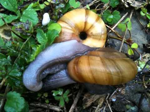Comment les escargots font l amour [PUNIQRANDLINE-(au-dating-names.txt) 43