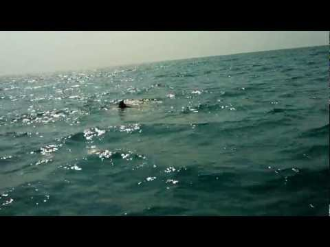 A Dive Into Arabian Sea
