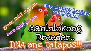 Paano malalaman kung naloko ka o hindi ng breeder na binilhan mo ng lovebirds? - DNA