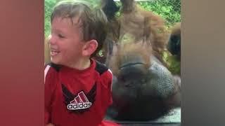 笑顔になれる動画。オランウータンは子どもにキスしがちな件