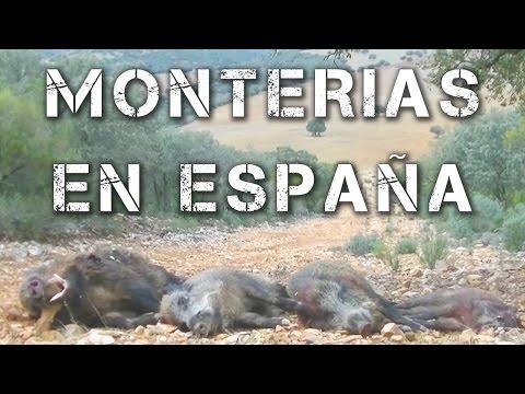 Videos de Monterias en ESPAÑA | Enero y Febrero 2016