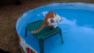 Коты сидят в бассейне Приколы про котов и кошек Приколы про животных