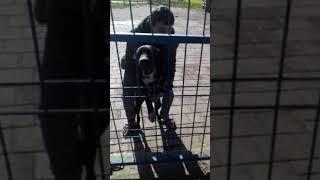Gambar cover Adana da köpek saldirmasi pasa