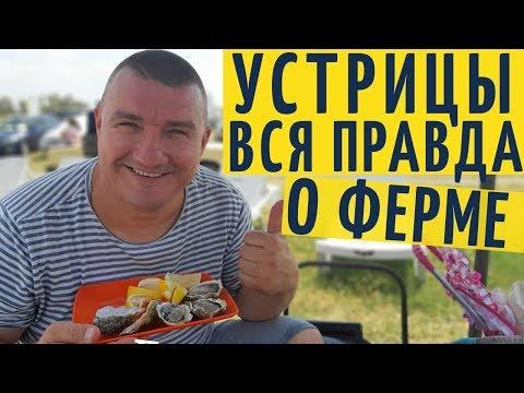 Правда про ферму Устрицы Скифии на Тилигульском лимане - путешествие 2019 года от Взрослый разговор