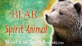 Bear Spirit Animal | Bear Totem & Power Animal | Bear Symbolism & Meanings