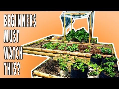 6 STARTING TIPS | Square Foot Gardening In Raised Beds (Do You Know Them ALL?)