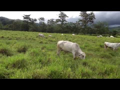 COSTA RICA!!!! 413 acres cattle farm, rivers, water falls, pasture, forest at incredible price!