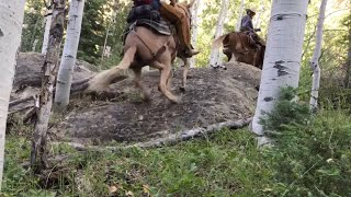Extreme Mule Riding- Pack Trip Edition