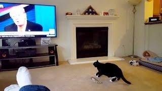 Cat Scared Of Donald Trump