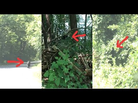 Captured On Video!  Mysterious Creature Caught In Multiple Forms In Broad Daylight!