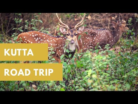 Road Trip from Bangalore to Kutta,Coorg Through NagarHole National Park