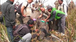 Rhinos on the Move