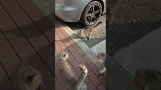 Смешные коты мяукают. Көңілді мысықтар мяу. Funny Cats Meow. Gatos Graciosos. Lustige Katzen.