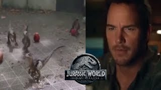 Baby Velociraptor Video - Owen Grady's Revelation | Jurassic World Fallen Kingdom Theory