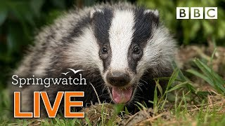 Cute wildlife cams Day 9 🦔 🐿🐣 | BBC Springwatch