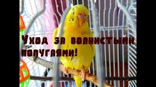 Уход за волнистыми попугаями.Часть 1. С чего следует начать? Уход и содержание волнистого попугая.