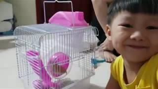 Quà Tết Trung Thu Của Mẹ ❤ Chuột Hamster Dễ Thương❤ Kids Toy Media❤