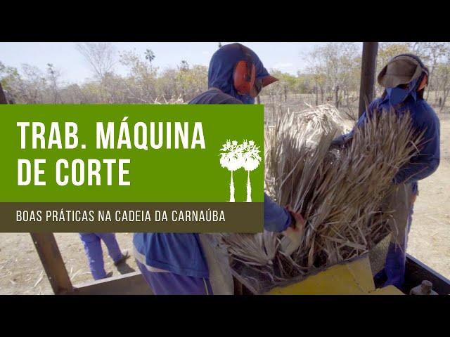 Trabalhadores da máquina de corte - Boas Práticas na Cadeia Produtiva da Carnaúba