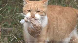 Homeless cat doesn't take food unless it's in a plastic bag – watch when the woman finds out why