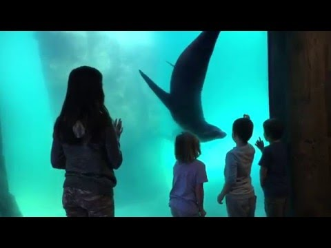 Playful Sea Lion at Turtleback Zoo pt. 2