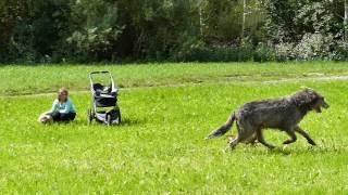 Größte und kleinste Hunderasse
