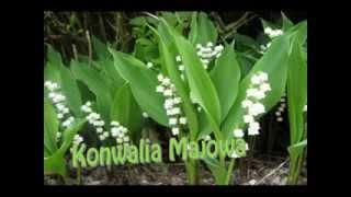 Chronione rośliny w Spoczynku  Rezerwat Przyrody Uroczysko Koneck