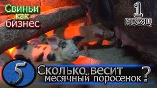 видео: ДЮРКИ В МЕСЯЦ