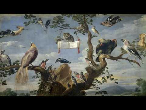Birdland (Weather Report) [Frans Snyders]