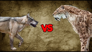 The DIre Wolf is the larger cousin of the Grey Wolf. They are sturd...