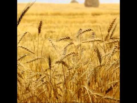 Sunchariot  Harvest
