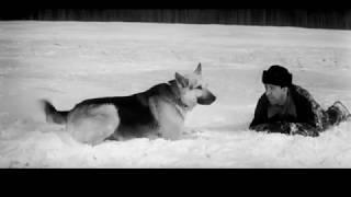 Ко мне, Мухтар (часть 4) Советский художественный фильм