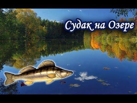 Ловля Судака на Озере. Русская Рыбалка 3.99.