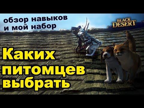 Каких питомцев выбирать? Обзор умений и особенностей петов в Black Desert (MMORPG - ИГРЫ)