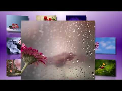 Обои на рабочий стол - цветы #1/Desktop Wallpapers - Flowers # 1