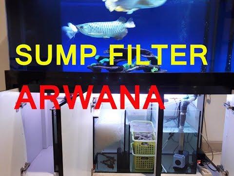 Membersihkan Sump Filter Blue Base Arwana