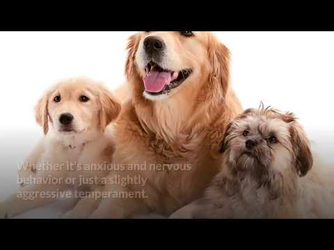 dog-calming-treats-review---how-to-relax-my-dog