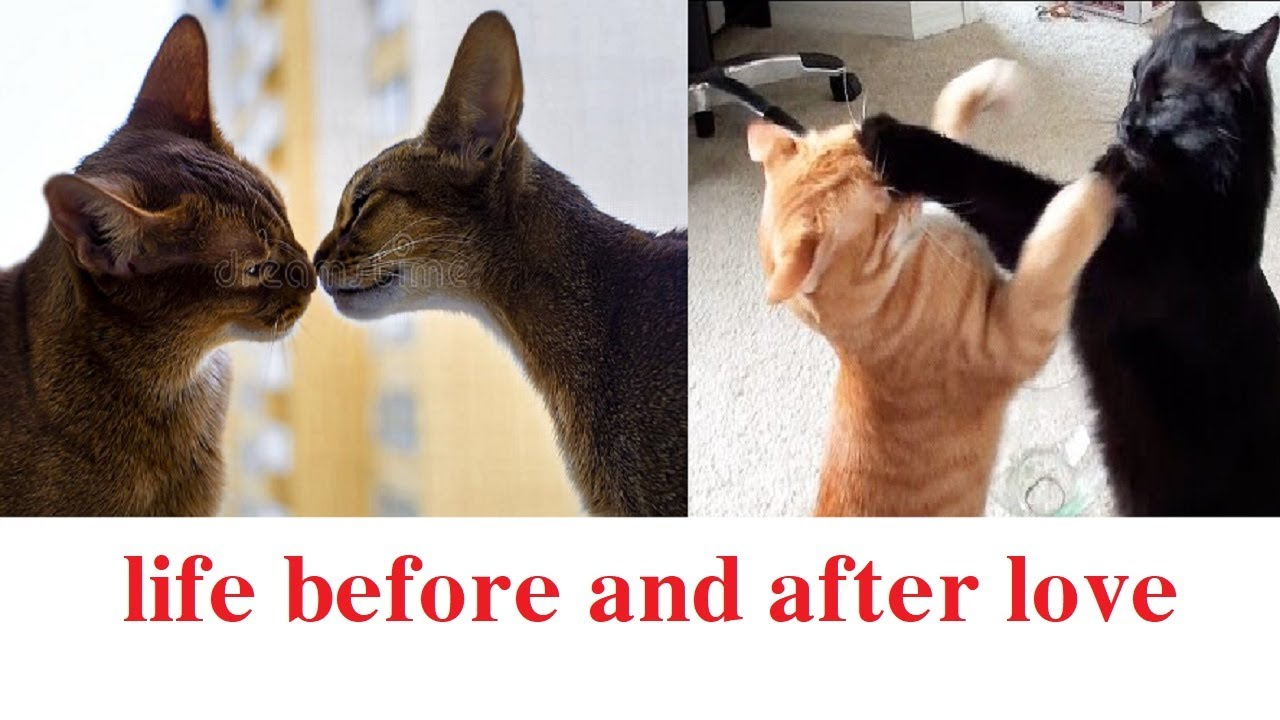 life before and after love