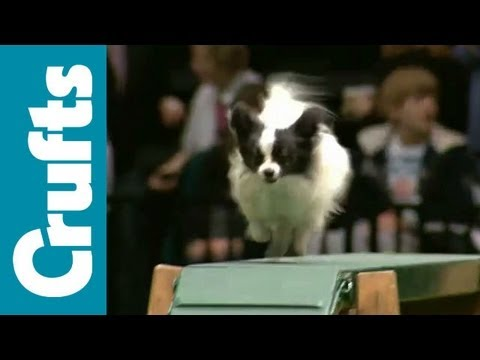 Agility - Small Challenge - Part 1 - Crufts 2012