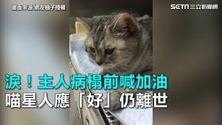 淚!主人病榻前喊加油  喵星人應「好」仍離世|三立新聞網SETN.com